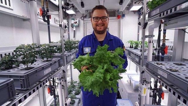 Вчені виростили в Антарктиді перший врожай овочів