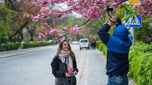 Геннадій Москаль попросив в «Укрзалізниці» додатковий потяг на час цвітіння сакури в Ужгороді