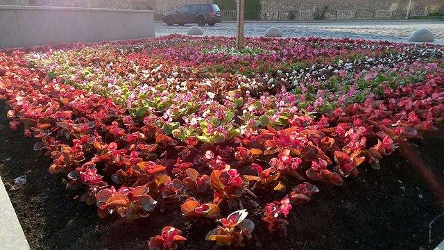 Львів'ян запрошують долучитись до висадки квітів на площі Митній