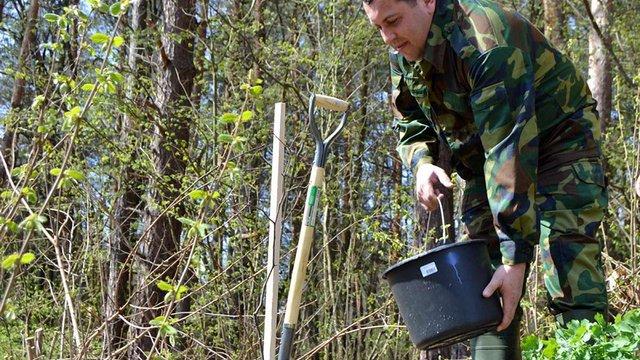 На Львівщині за кілька годин висадили найдовшу в України липову алею