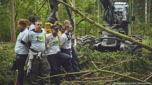 Європейський суд вирішив, що Польща незаконно вирубувала дерева у Біловезькій пущі