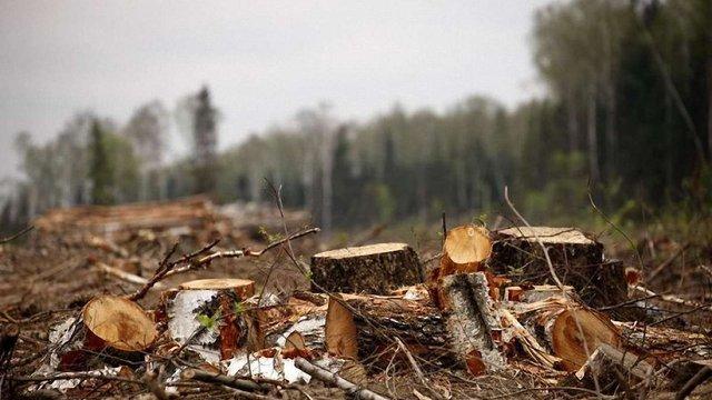 За незаконну вирубку на ₴1,3 млн майстра лісу покарали штрафом у ₴10 тис.
