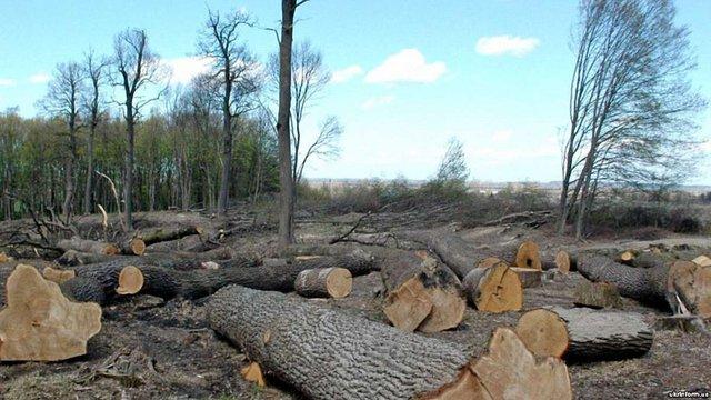 Дрогобицький суд звільнив від покарання охоронця лісу, що допустив вирубку дерев на ₴857 тис.