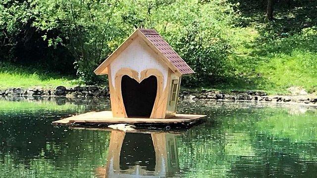 На озері у Стрийському парку з'явились новий будиночок для лебедів та плаваюча клумба
