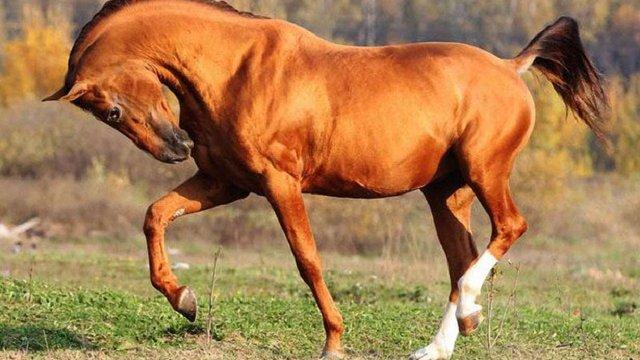 У Золочівській лікарні помер 55-річний чоловік, якого травмував кінь