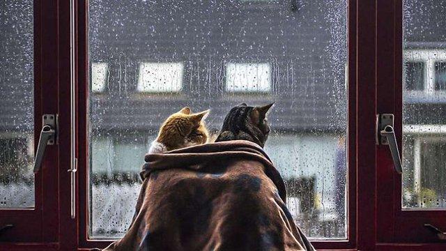 З понеділка в Україну прийдуть сильні дощі та грози