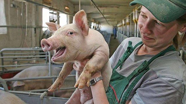 Великий виробник свинини з Данії вирішив побудувати завод на Івано-Франківщині