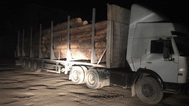 На Закарпатті працівник лісгоспу незаконно рубав і продавав ліс