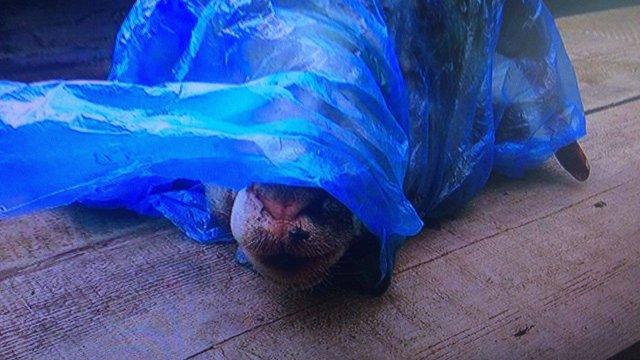 На Луганщині чоловік підкинув відрізану голову барана в автівку активіста