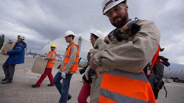 Безпритульних цуценят із зони відчуження ЧАЕС відвезуть до США