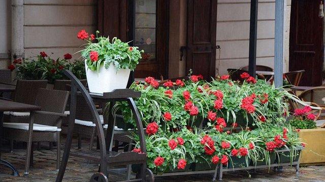 У Львові обрали найкращі балкон, підвіконня та літній майданчик з квітами