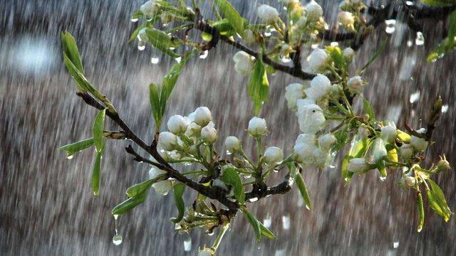 На вихідних в Україні похолоднішає і дощитиме з грозами
