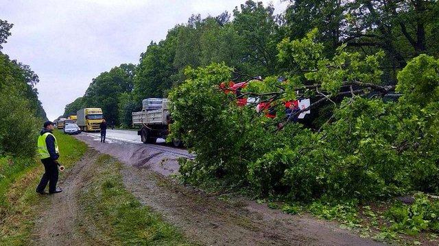 Через падіння дерева на трасу Львів-Городок травмувався водій