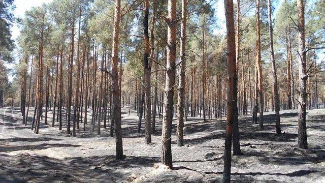 На Херсонщині ліквідували лісову пожежу, що тривала 5 днів