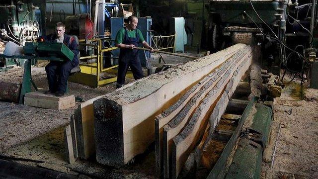 Деревообробне підприємство на Львівщині оштрафували за неоформлених працівників