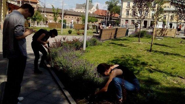 На площі Митній висадили кущі чаберу та троянд