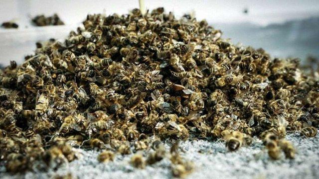 Агрогосподарство екс-депутата облради на Волині потруїло інсектицидом бджіл місцевих пасічників