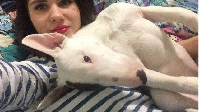 За відео убивства кошеняти харківську студентку оштрафували на ₴5 тис.