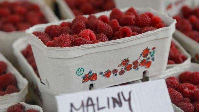 Через низькі ціни і брак працівників польські фермери припинили збір ягід