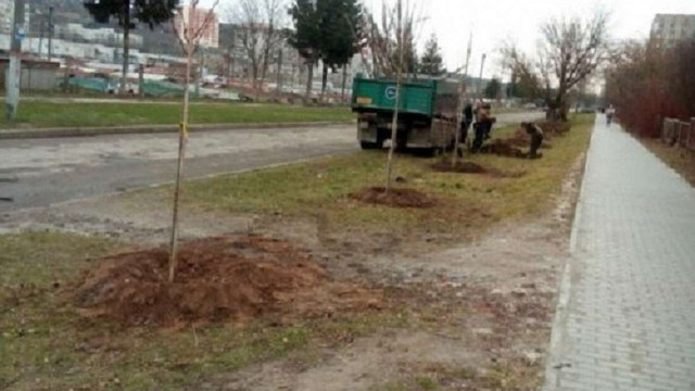 У Львові близько ₴1 млн виділили на висадку дерев