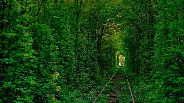 В'їзд до «Тунелю кохання» на Рівненщині для туристів зробили платним