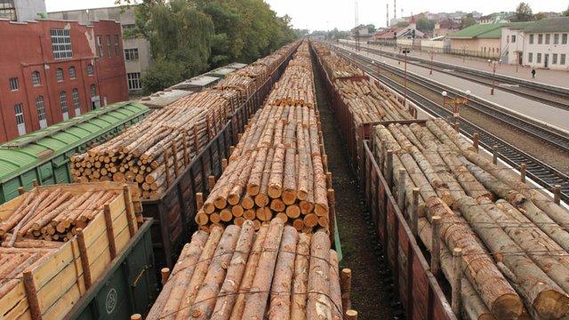 Україна стала лідером з незаконного постачання деревини до Європи