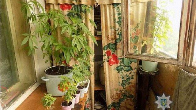 Під час вгамування сімейної сварки у Моршині поліція виявила на балконі плантацію коноплі