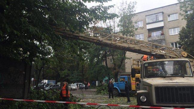 Через зламане дерево у Львові не курсує трамвай №7