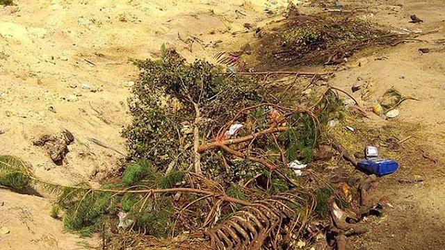 У лісі на Жовківщині виявили забруднення ґрунту через незаконний скотомогильник