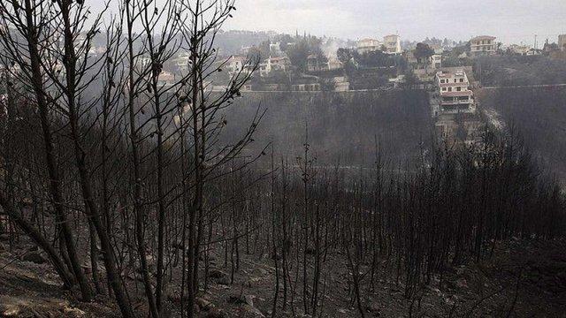 Влада Греції озвучила ймовірну причину масштабних лісових пожеж