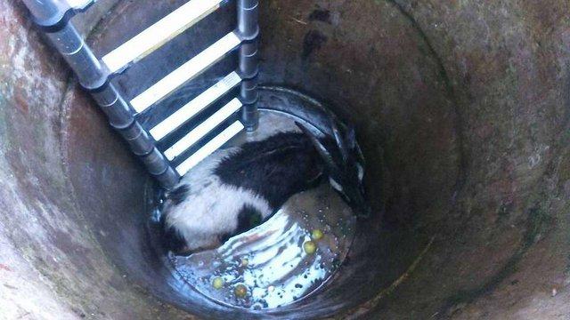 У Брюховичах рятувальники витягли з криниці козу