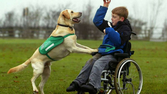 ЛКП «Лев» виховуватиме собак-терапевтів для реабілітації людей з інвалідністю