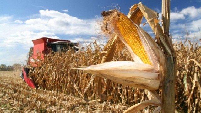 Україна очікує на рекордний врожай кукурудзи, а також збільшення продажів у Китай