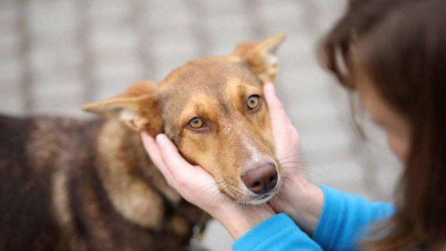 Волонтери нарахували у Львові 405 безпритульних собак