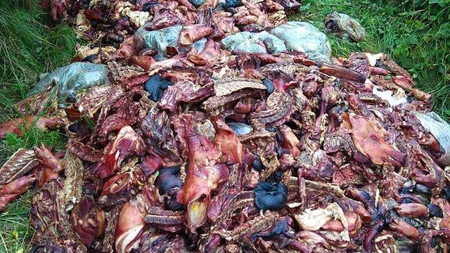 Прокуратура відкрила провадження за фактом викидання 6 тонн тваринних рештків на Жовківщині