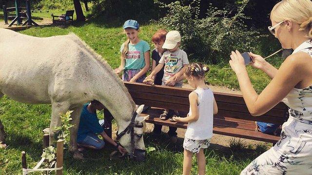 На ярмарку у парку «Знесіння» збиратимуть кошти для допомоги травмованим тваринам