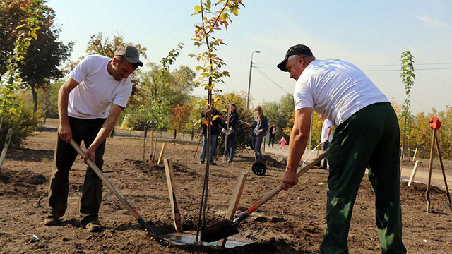 У львівських парках висадять понад 360 молодих дерев