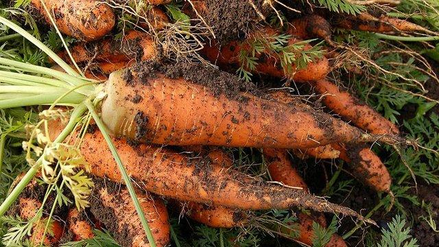 Україна почала імпортувати моркву з Білорусі через високу ціну на власні овочі