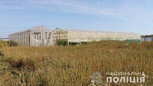 Плантацію конопель на 10 млн грн виявила поліція у селі на Закарпатті
