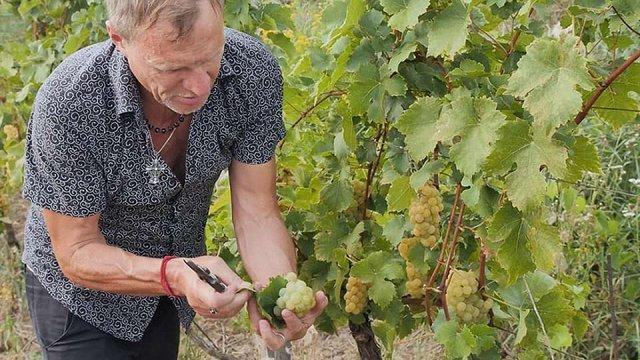 Олег Скрипка зайнявся виноробством на Закарпатті