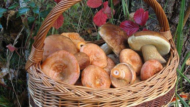 На Львівщині зафіксовано перший випадок отруєння грибами  цього сезону