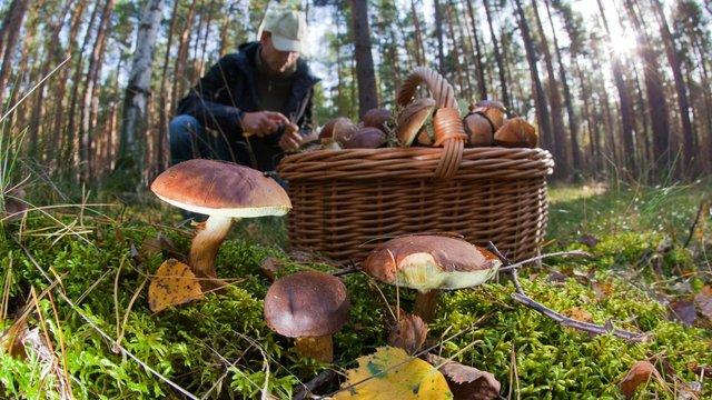 З початку року 174 українці отруїлися грибами