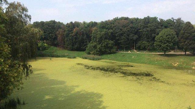 У львівські «Піскові озера» запустять мальків білого амура