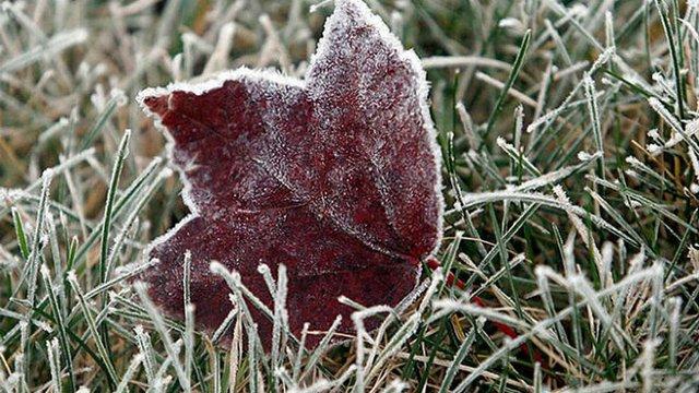 У найближчу добу у Львові синоптики прогнозують заморозки