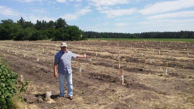 В Україні посадили перший промисловий сад ківі