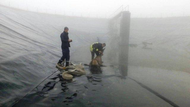 На Львівщині рятувальники витягли з 4-метрового порожнього басейну оленицю