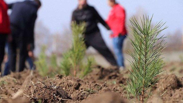Львів'ян запрошують долучитись до висадки лісу у Страдчі та Соснівці