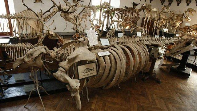 Львів'ян запрошують на екскурсію одним із найстаріших університетських музеїв Європи