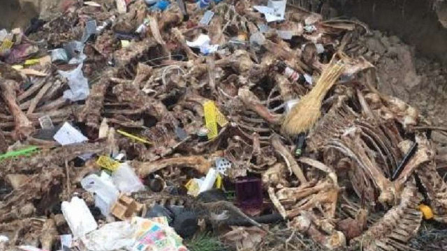 На Жовківщині екологи виявили нелегальний скотомогильник