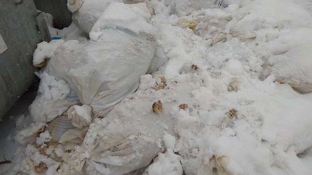 У Жовкві біля сміттєвих контейнерів виявили понад 25 мішків із рештками тварин